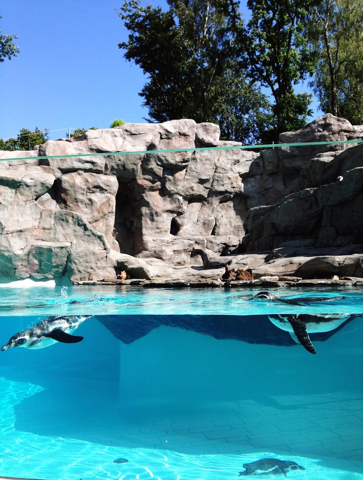 kraków zoo zdjęcia pingwinów