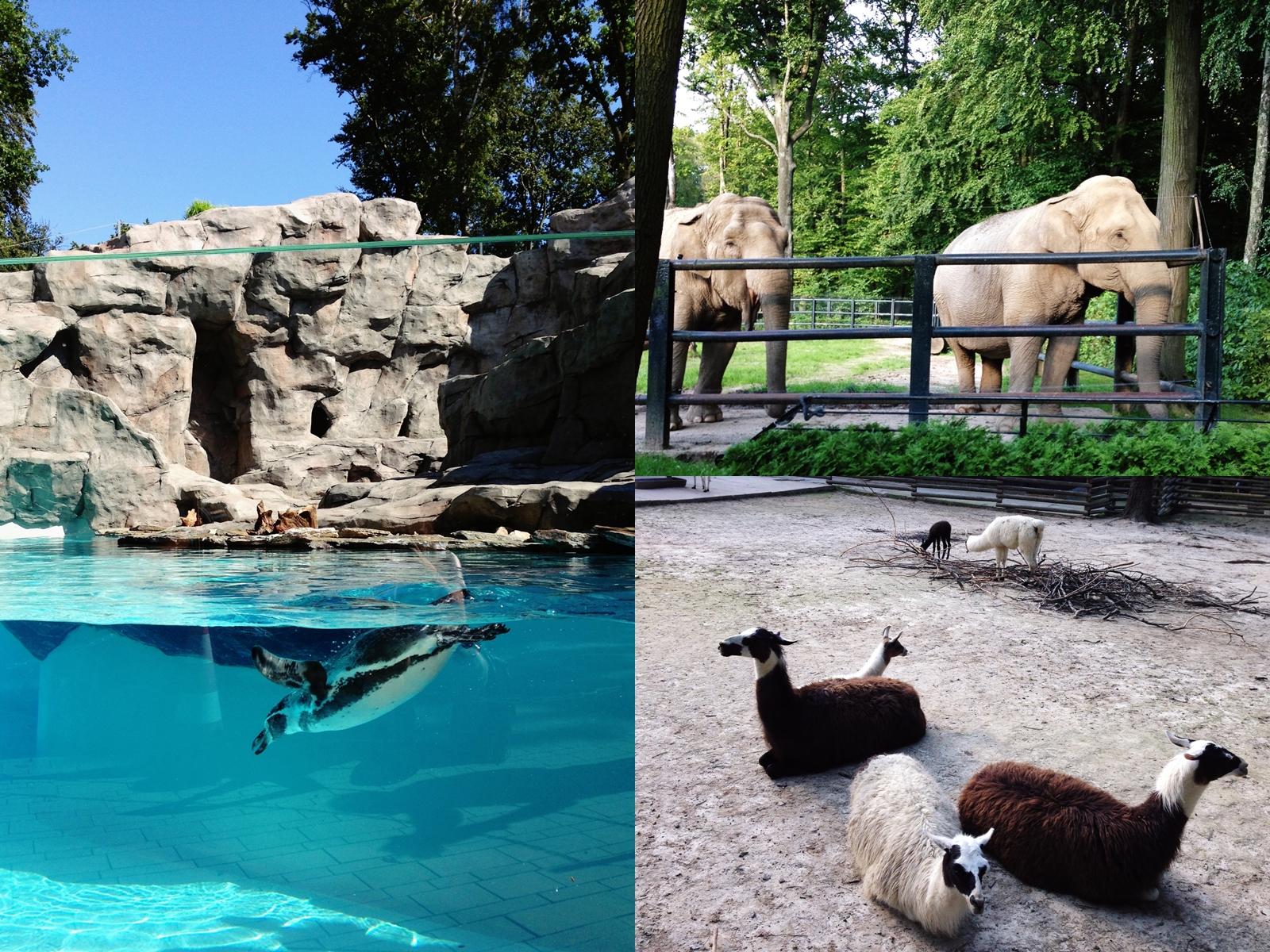 kraków Zoo zdjęcia
